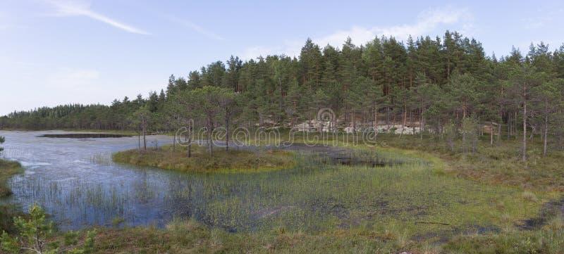 Panorama av en sjö i träsk royaltyfri bild