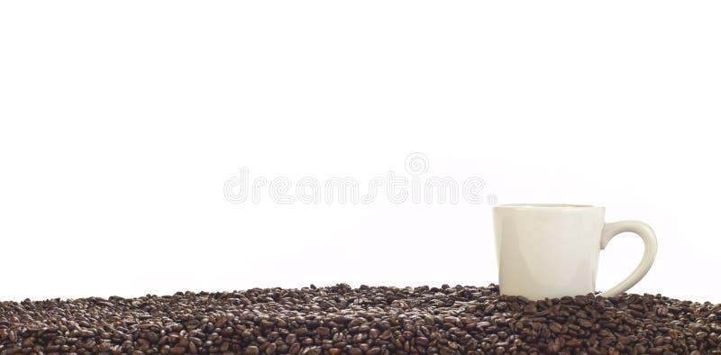 Panorama- av kaffekoppen och hela bönor royaltyfri foto