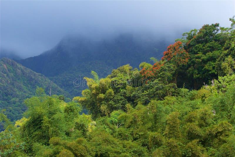 Panorama av Martinique som är karibisk royaltyfri fotografi