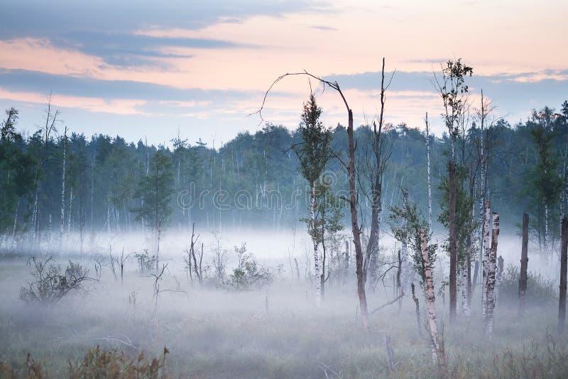 Panorama av morgonmisten på sjön i träna royaltyfri fotografi