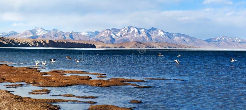 Panorama av sjön Manasarovar i västra Tibet arkivbild