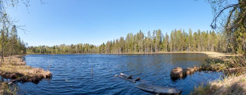 Panorama av sjöskogen royaltyfri fotografi