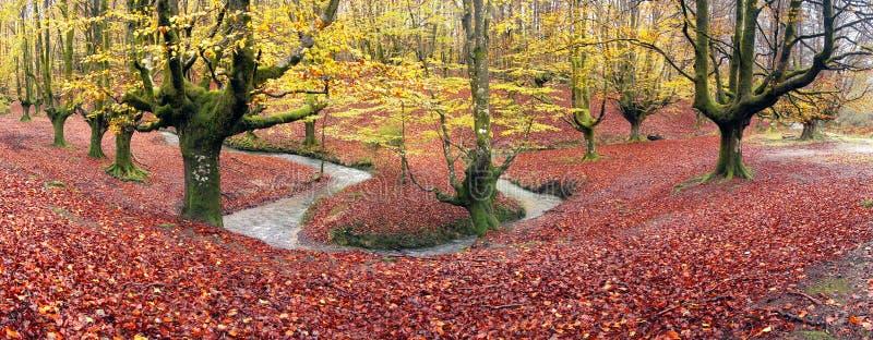 Panorama av skogen i höst arkivfoto