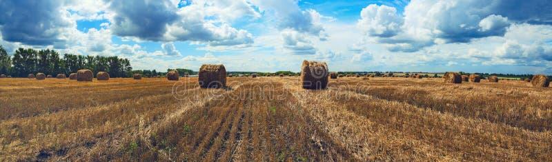 Panorama av sugrörbaler i tomt fält, når att ha skördat tid på en bakgrund av mörka dramatiska moln i mulen himmel arkivfoton