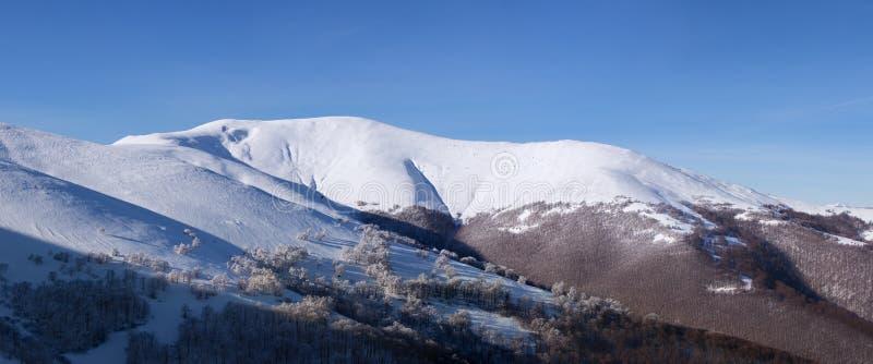 Panorama av vinterlandskapet för Carpathian berg royaltyfria bilder