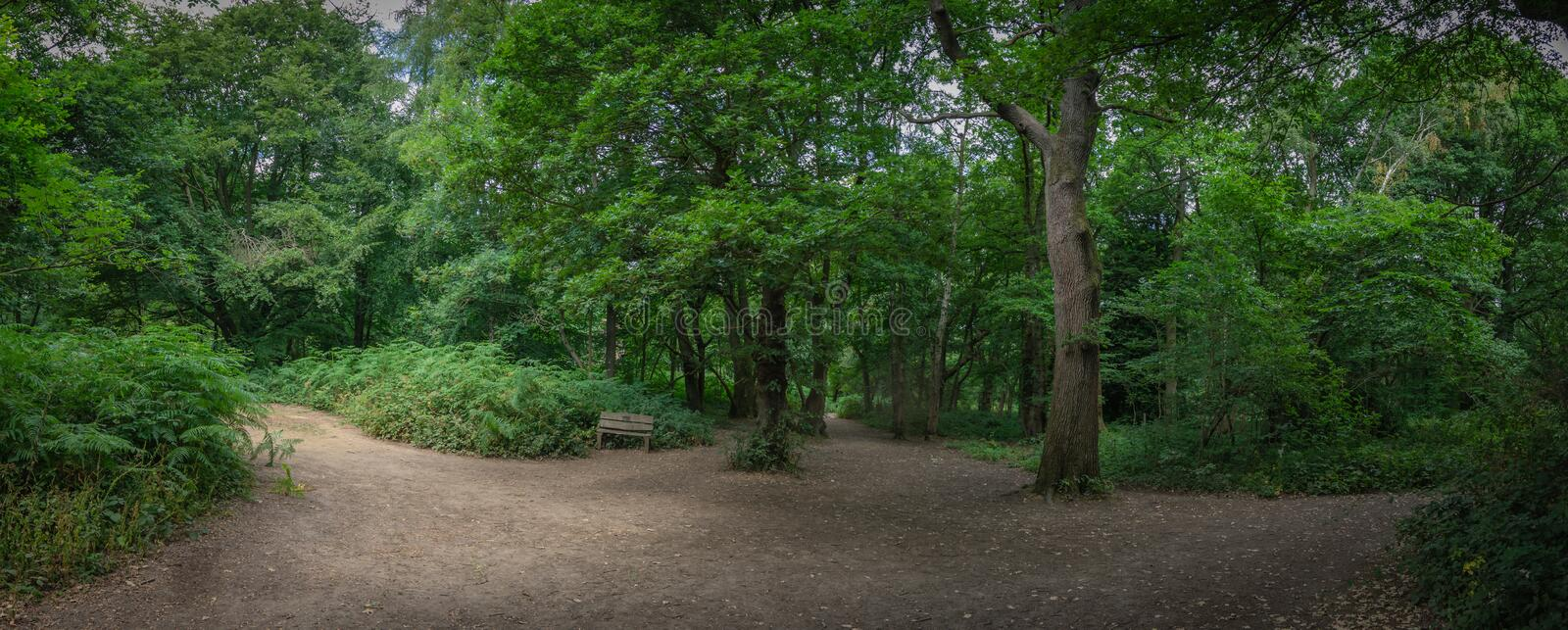 Panorama of Banstead woods. Panoramic view of the path through Banstead woods in Surrey, England stock image