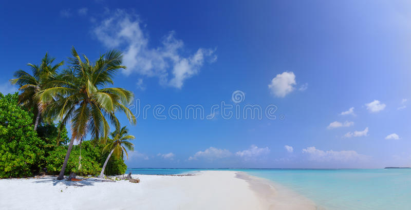 Panorama of Beach at Maldives island Fulhadhoo with white sandy idyllic perfect beach and sea and curve palm. Scenic panorama view of Wild idyllic Beach at stock image