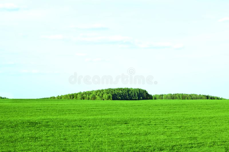 Panorama of beautiful countryside of belarus. Sunny afternoon. Wonderful springtime landscape. Grassy field. Rural scenery royalty free stock images