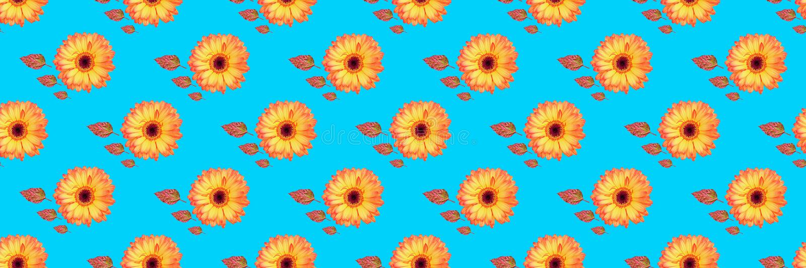 panorama of beautiful gerbera flowers and vibrant leaves background stock illustration