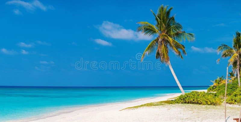 Beautiful tropical beach at Maldives royalty free stock image