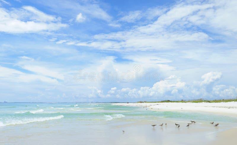 Panorama of the Beautiful White Sand Beach of the Florida Gulf Coast royalty free stock image
