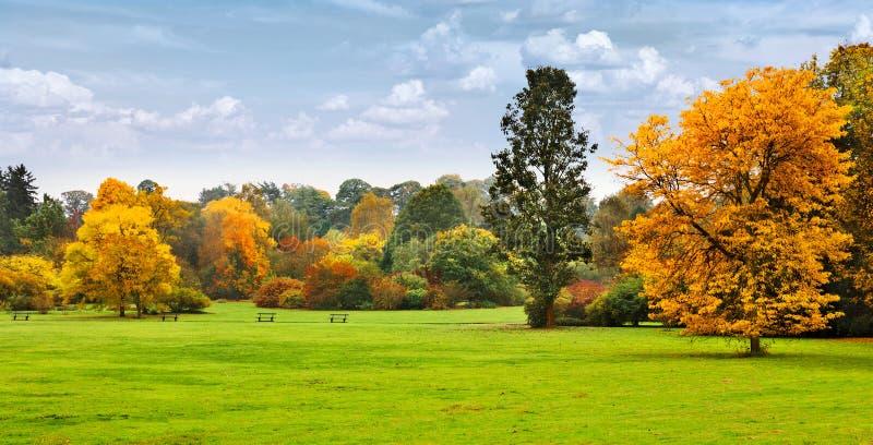 Panorama. Bei alberi di autunno. Autunno. fotografia stock