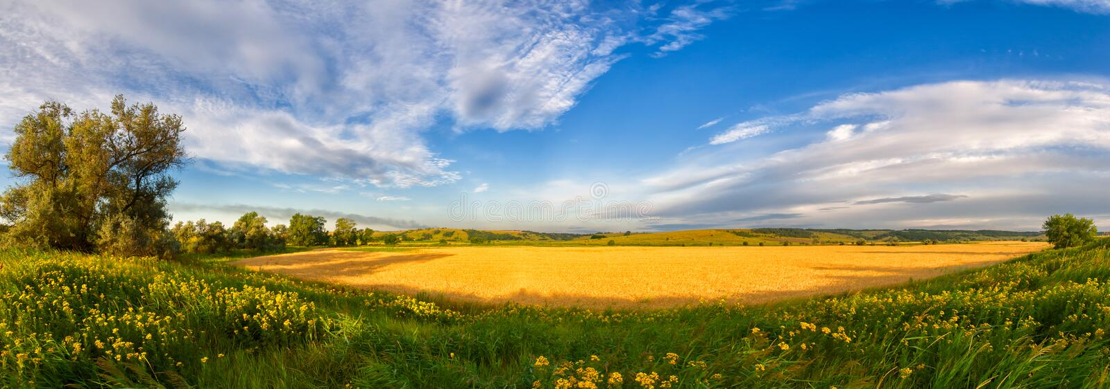 Panorama of a big summer field stock image