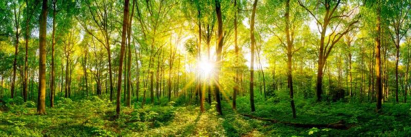 Panorama bonito da floresta imagem de stock royalty free