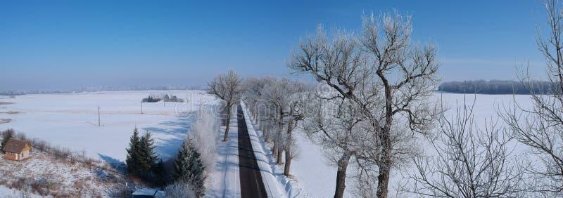 Panorama bonito do inverno com estrada e a aleia velha da árvore, vista aérea imagens de stock
