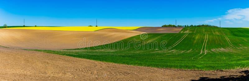 Panorama brillante de las tierras de labrantío Campo de la colza, concepto del área cultivada imágenes de archivo libres de regalías