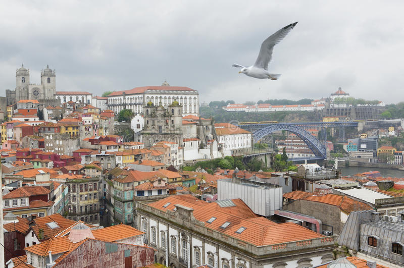 Panorama of the city of Porto Portugal. Seagull flying over the historic center of Porto Portugal stock photography