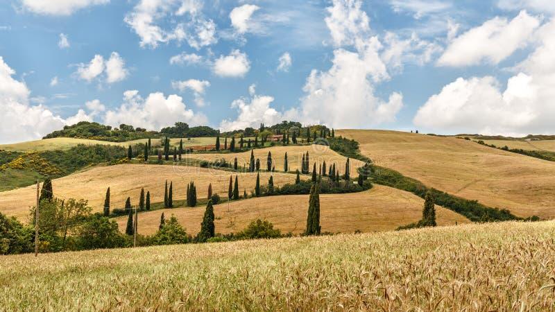 Panorama, colinas, ciprés y prado del paisaje de Toscana, fotografía de archivo libre de regalías