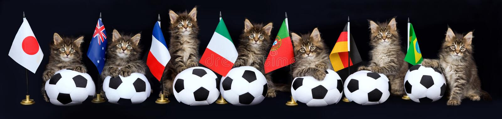 Panorama Collage Of Kitten With Soccer Balls Stock Image