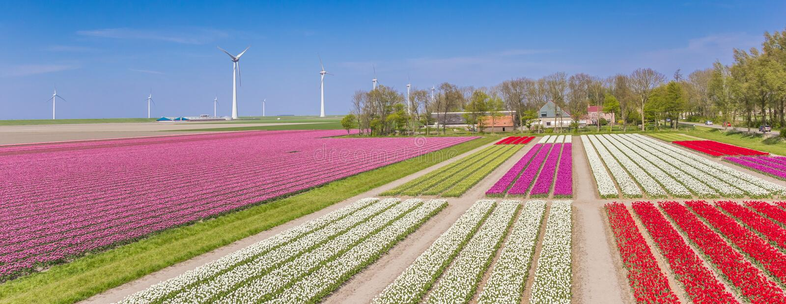 Panorama of a colorful tulips field and wind turbines stock images