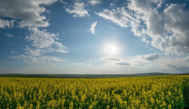Panorama com campos grandes da violação fotografia de stock