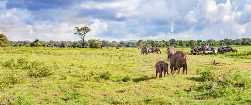 Panorama com elefantes e safari dos jipes imagem de stock