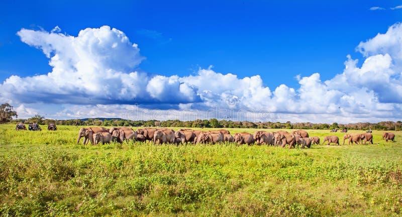 Panorama com elefantes e safari dos jipes fotos de stock