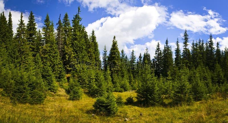 Panorama com a floresta carpathian em Romania foto de stock