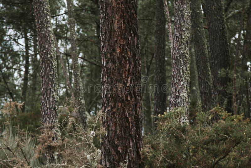 Panorama con el bosque cárpato en Rumania imagen de archivo