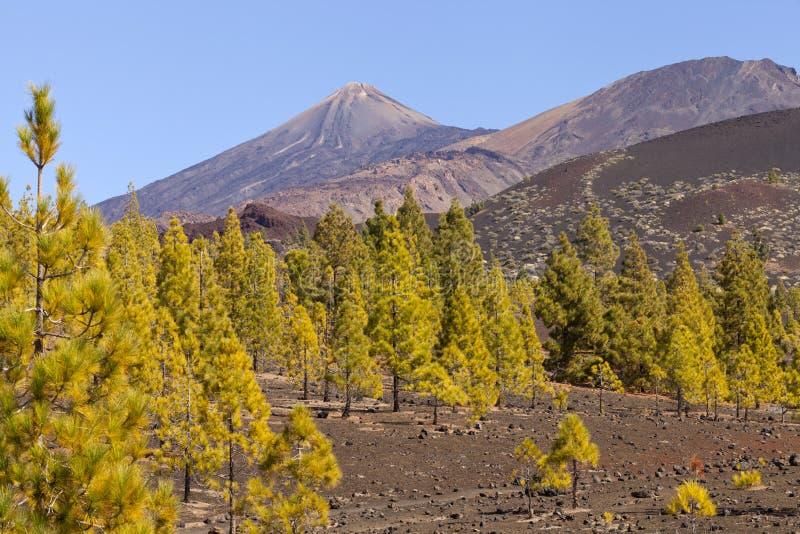 Panorama con el bosque del pino, formaciones del volcán de roca imagenes de archivo
