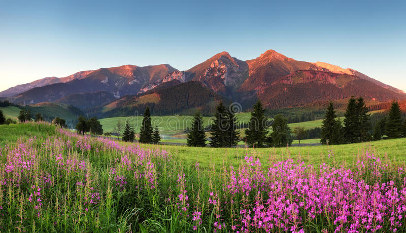 Panorama con las flores - Eslovaquia de la montaña de la belleza fotografía de archivo