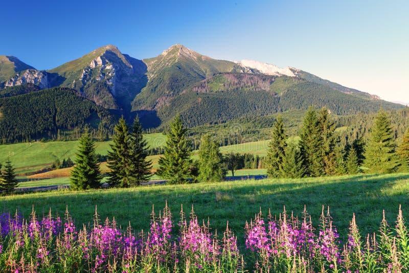 Panorama con las flores - Eslovaquia de la montaña de la belleza imágenes de archivo libres de regalías
