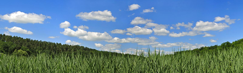 Panorama con las nubes y la caña fotografía de archivo libre de regalías