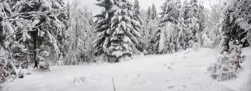 panorama con un claro del bosque del invierno fotos de archivo