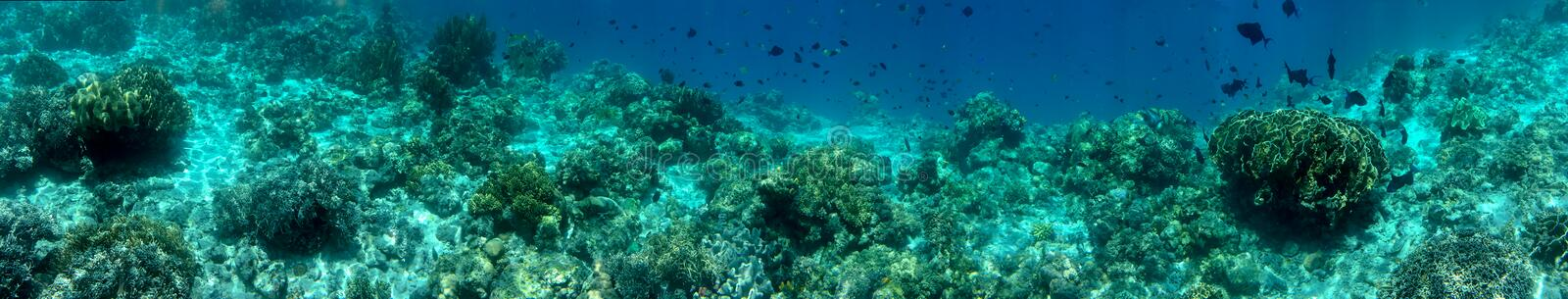 Panorama Coral Reef Scene unter Water stock images