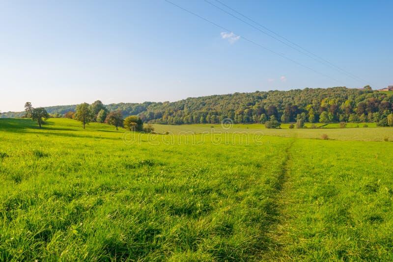 Panorama d'un pré vert sur une colline au soleil photo stock