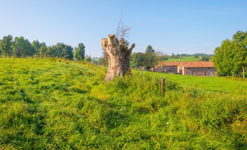 Panorama d'un pré vert sur une colline au soleil photographie stock libre de droits