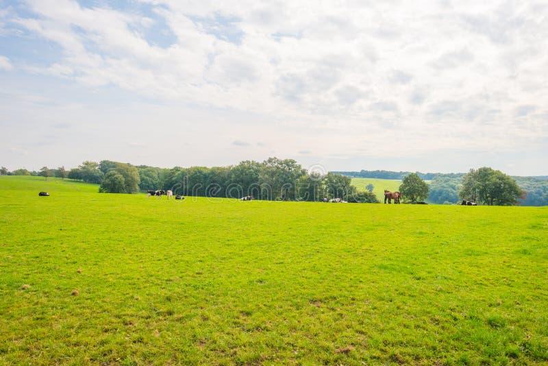 Panorama d'un pré vert sur une colline au soleil photos libres de droits