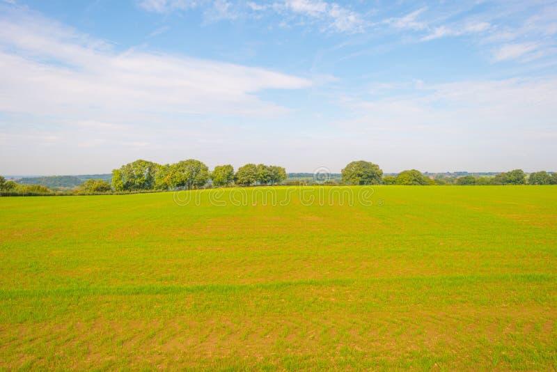 Panorama d'un pré vert sur une colline au soleil image stock