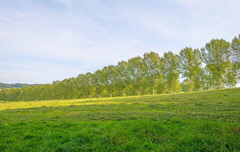 Panorama d'un pré vert sur une colline au soleil images stock