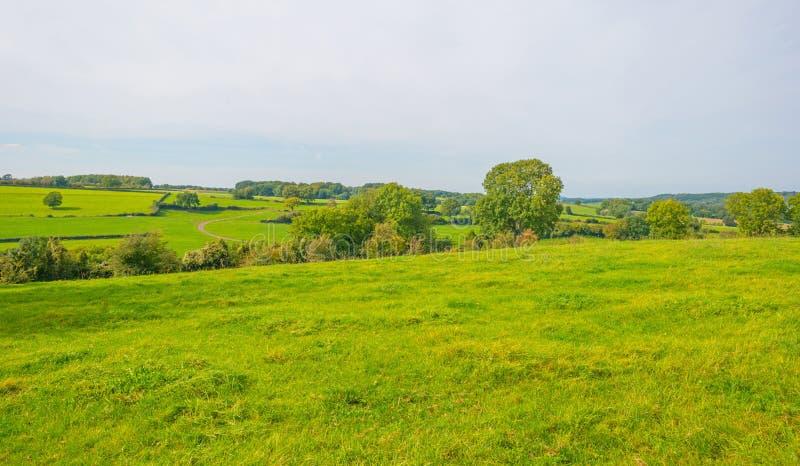 Panorama d'un pré vert sur une colline au soleil image libre de droits