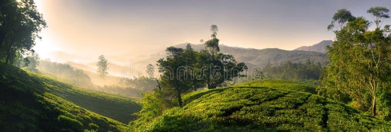Panorama d'une belle plantation de thé au lever de soleil Kerela, Inde image stock