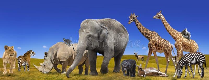 Panorama da coleção dos animais selvagens imagem de stock royalty free