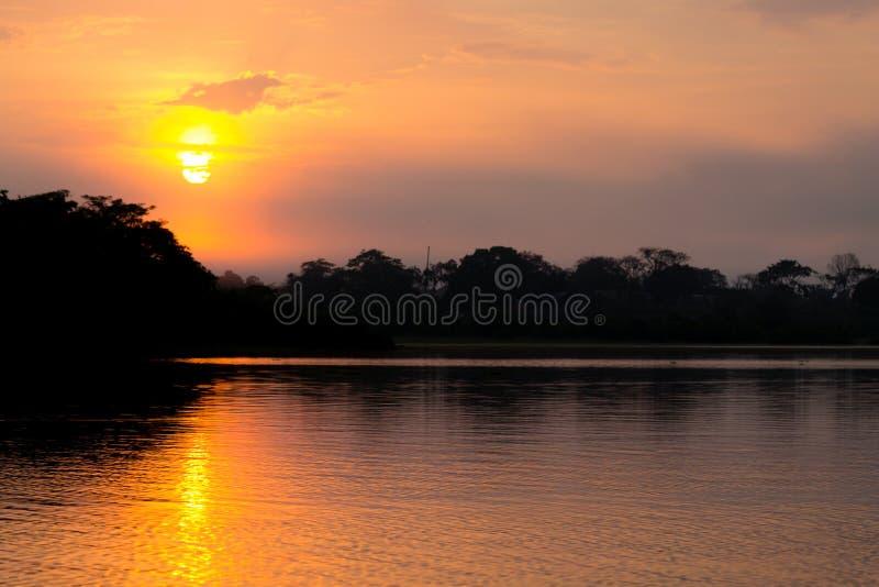 Panorama da floresta amazônica, região úmida brasileira fotografia de stock