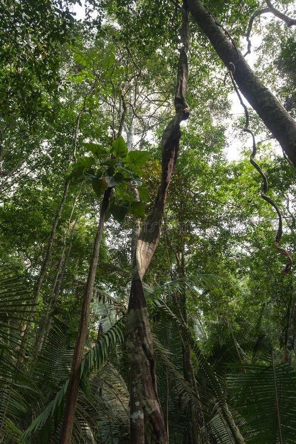 Panorama da floresta amazônica, região úmida brasileira foto de stock royalty free