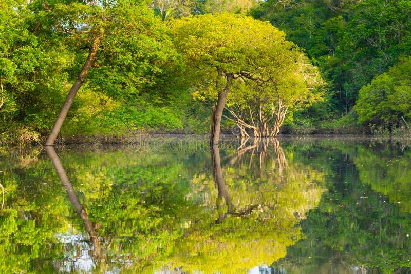 Panorama da floresta amazônica, região úmida brasileira fotos de stock royalty free