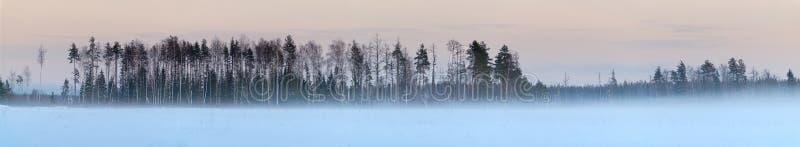 Panorama da floresta do inverno com muitos neve imagens de stock