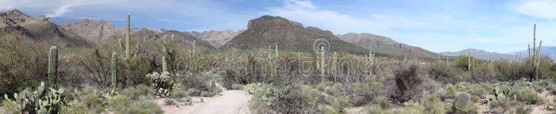 Panorama da montanha de Tucson fotos de stock royalty free