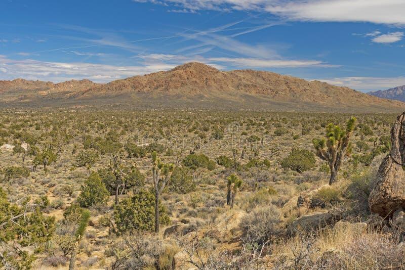 Panorama da montanha do deserto na mola adiantada imagens de stock royalty free