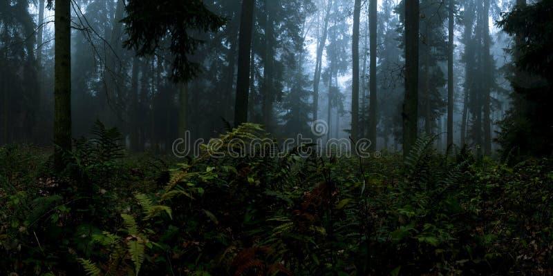 Panorama da noite imagem de stock